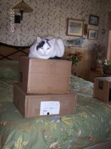 pillow box sit