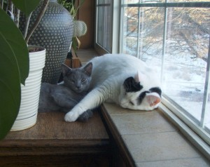 pillow sill kitt