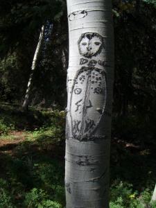 beetle tree face?