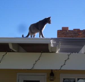cattawnroof