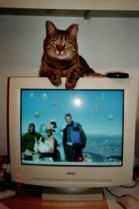 cat_on_monitor