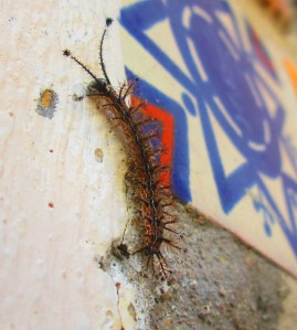 Shower-Room Caterpillar !